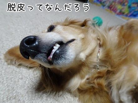 kinako9173.jpg