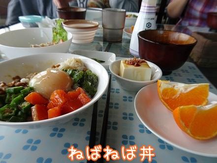 kinako9180.jpg