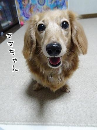 kinako9212.jpg