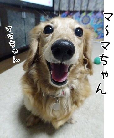 kinako9213.jpg