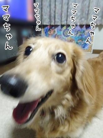 kinako9214.jpg