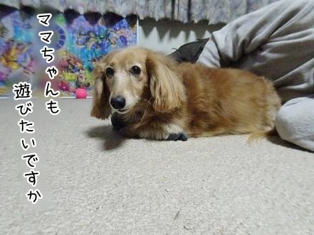 kinako9219.jpg