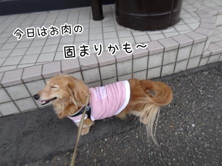 kinako9224.jpg