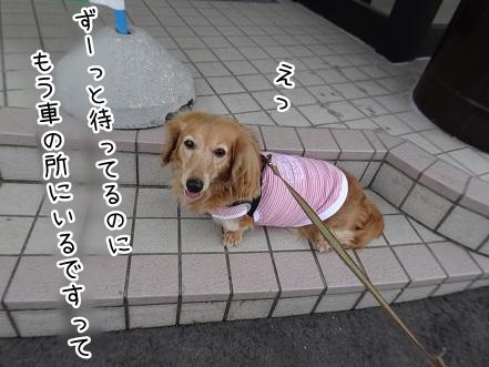 kinako9225.jpg