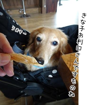 kinako9244.jpg