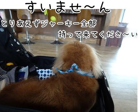 kinako9245.jpg