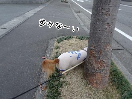 kinako9254.jpg