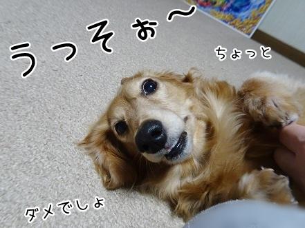 kinako9259.jpg