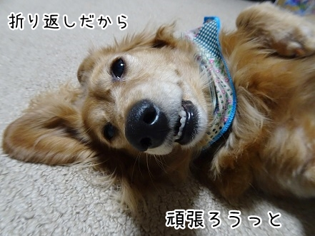 kinako9275.jpg