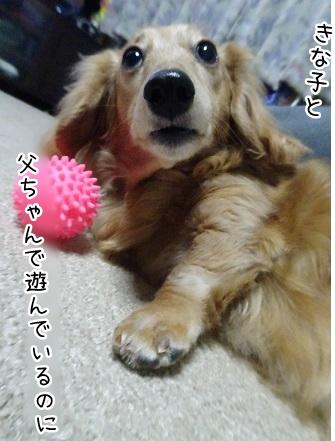 kinako9284.jpg