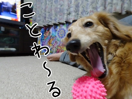 kinako9285.jpg