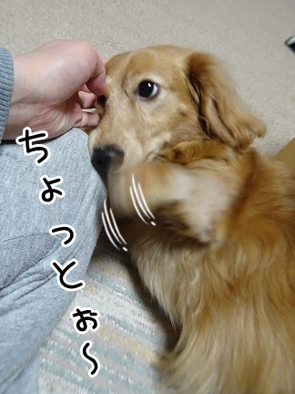 kinako9289.jpg