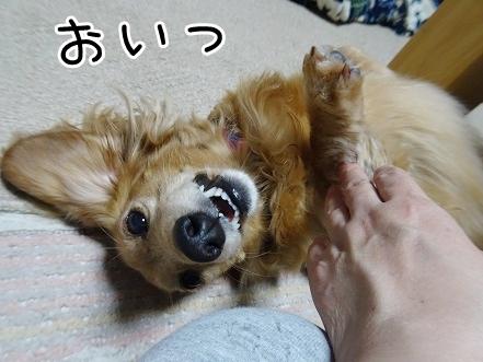 kinako9290.jpg