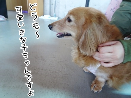 kinako9292.jpg