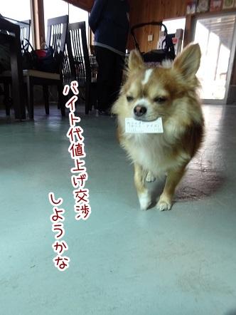 kinako9297.jpg