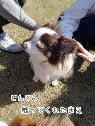kinako9298.jpg