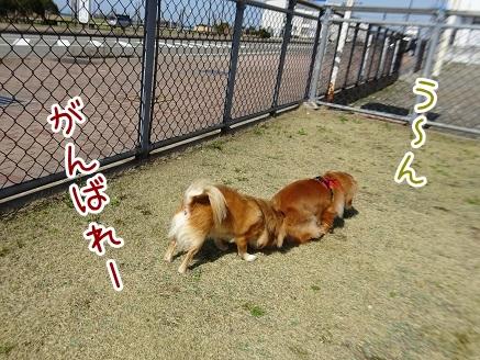 kinako9301.jpg