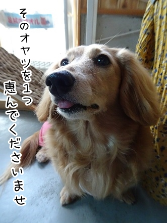 kinako9302.jpg