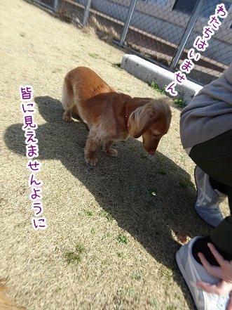 kinako9303.jpg