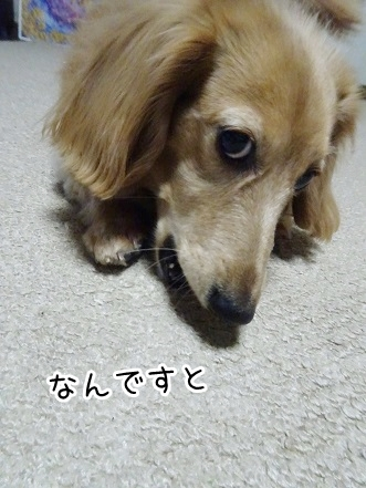 kinako9305.jpg