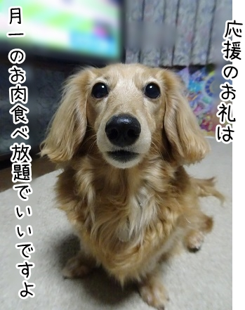 kinako9307.jpg
