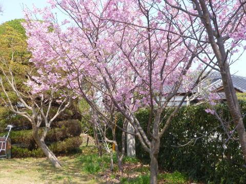 桜の下で(1)