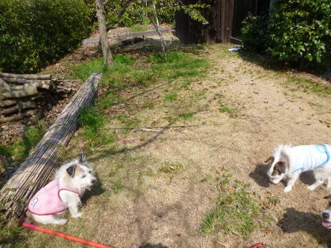 桜の下で(4)