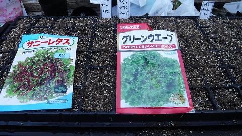 2018.3.24菜園4