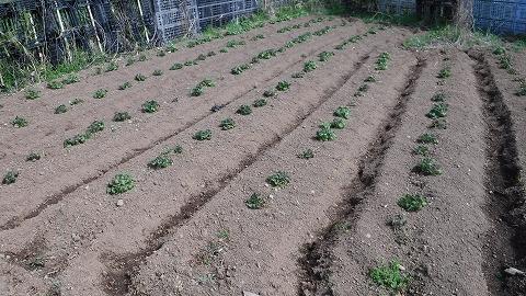 2018.3.24菜園16