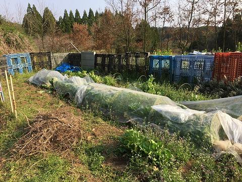 2018.3.24菜園40