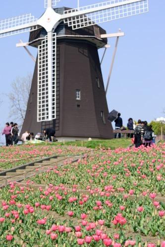 風車とチューリップDSC_0653