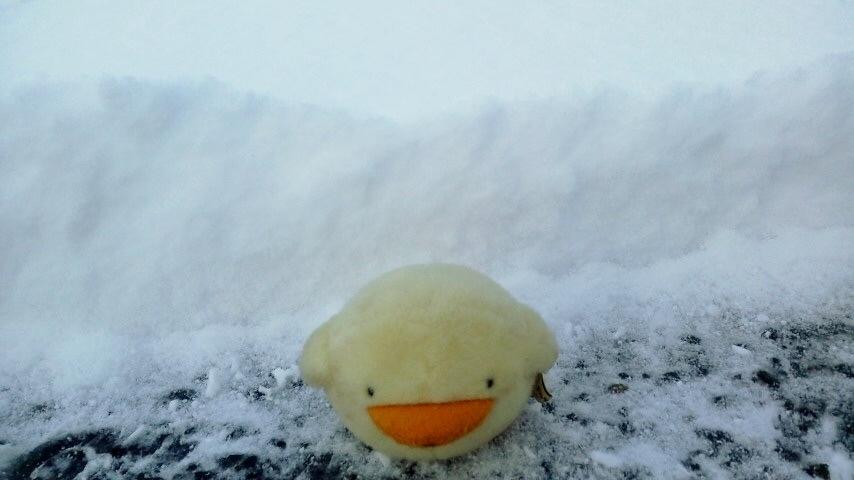 雪まみれ・・・