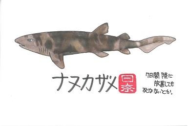 ナヌカザメ