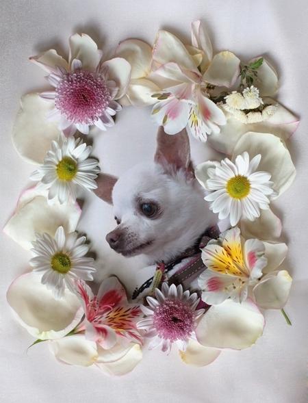 PhotoFunia-1519394576.jpg