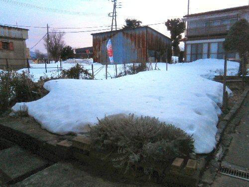01b 500 20180303 LLgarden lavender less snow
