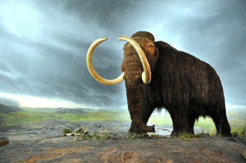 04b 500 Wooly Manmoth