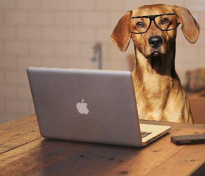 09 400 dog wearing glasses