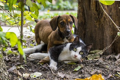 05 500 cat and dog