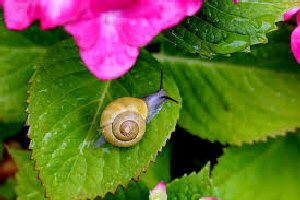 03 300 snail on a leaf