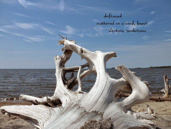03 600 20140708 b (火) driftwood