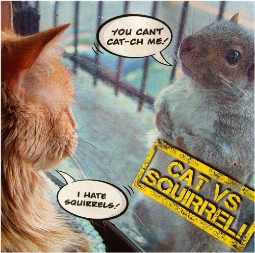 04 500 Cat vs Squerrel