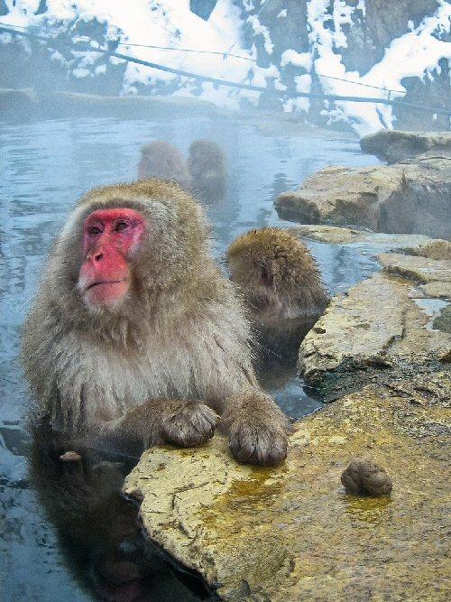 04b 500 monkey spa 地獄谷