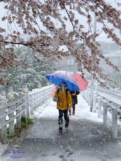 01 400 春の雪