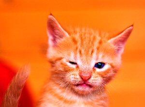 09 300 winking kitten