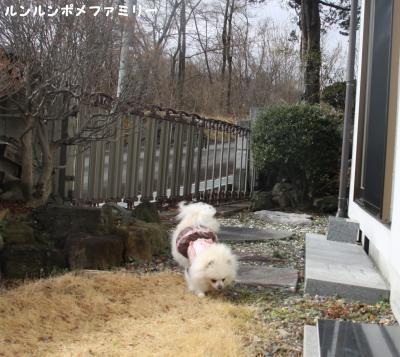 瑠妃 お庭遊び