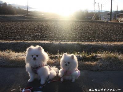 田んぼと朝日