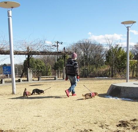 長池公園180206⑥
