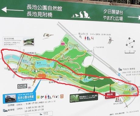 長池公園180206⑰