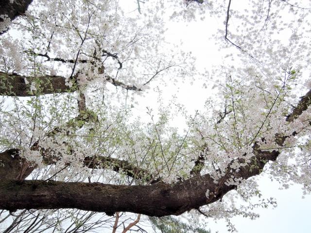 鷹巣中央公園201605000002