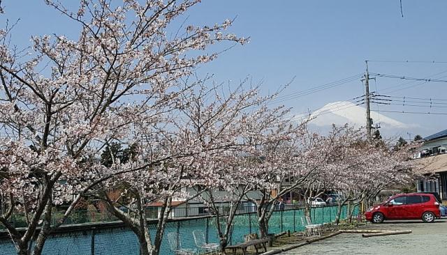 水神公園からの富士山